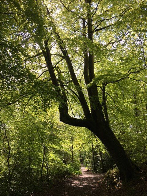 Woodland Walks & Parkland
